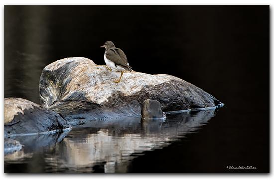 Bird Guemes Island