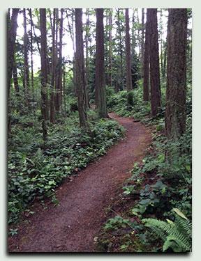 trail-4
